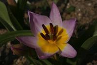 Photographie n°jlt021653 du taxon