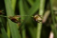 Photographie n°jlt022868 du taxon