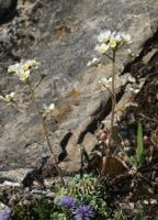 Photographie n°jlt022935 du taxon