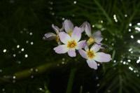Photographie n°jlt023358 du taxon