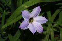 Photographie n°jlt028322 du taxon