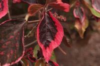 Photographie n°jlt028721 du taxon