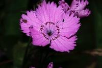 Photographie n°jlt028939 du taxon