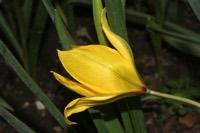 Photographie n°jlt029592 du taxon