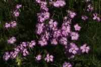 Photographie n°jlt034468 du taxon