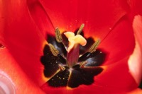 Photographie n°jlt038682 du taxon