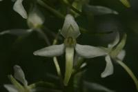 Photographie n°jlt043930 du taxon