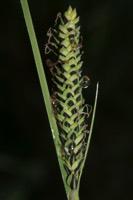 Photographie n°jlt047522 du taxon