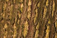Photographie n°jlt050618 du taxon