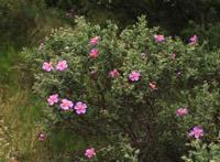 Photographie n°jlt052489 du taxon