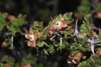 Photographie n°jlt052971 du taxon
