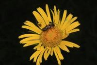 Photographie n°jlt053045 du taxon