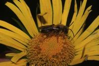 Photographie n°jlt053047 du taxon