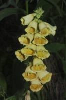 Photographie n°jlt055132 du taxon