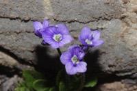 Photographie n°jlt055542 du taxon