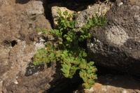 Photographie n°jlt058026 du taxon