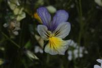 Photographie n°jlt059559 du taxon
