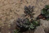Photographie n°jlt061076 du taxon