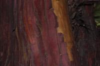Photographie n°jlt063670 du taxon
