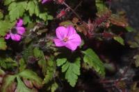 Photographie n°jlt063743 du taxon