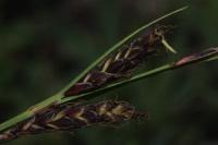 Photographie n°jlt065765 du taxon