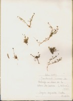 Photographie n°jlt075592 du taxon