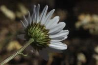 Photographie n°jlt080529 du taxon