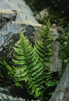 Photographie n°jlt084114 du taxon