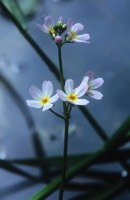 Photographie n°jlt085652 du taxon