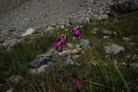 Photographie n°jlt088765 du taxon