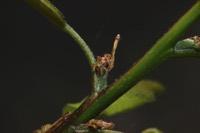Photographie n°jlt092328 du taxon