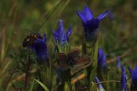 Photographie n°jlt094159 du taxon