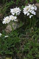 Photographie n°yq005338 du taxon